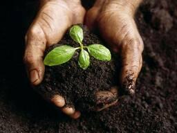 Агрохимический анализ почвы на плодородие