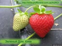 Агроволокно черное клубника (цена, купить, Киев)