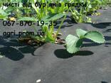 Агроволокно чорне Premium-Agro, Польща - фото 4