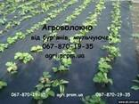 Агроволокно чорне Premium-Agro, Польща - фото 1