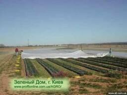 Агроволокно -укрывной материал для клубники, овощей. Купить.