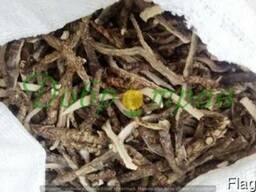 Аир, корень (Acorus calamus)