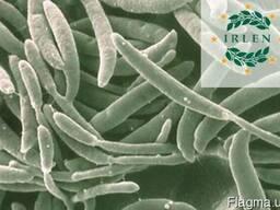 Анализ растений (грибковые заболевания)