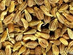 Анис, семена.