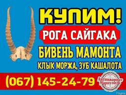 Антиквариат, награды СССР куплю