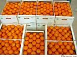 Апельсины оптом. Египет - фото 1