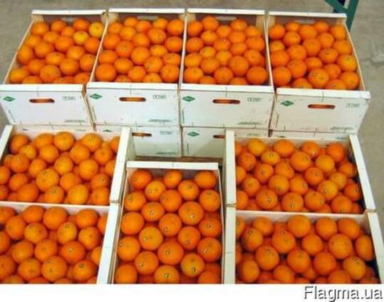 Апельсины оптом. Египет