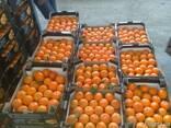 Апельсины оптом купить - фото 1