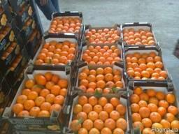 Апельсины оптом купить