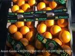 Апельсины оптом (Турция, Египет) - фото 4
