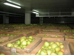 Аренда помещений для хранения овощей, фруктов и цитрусовых