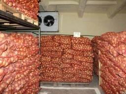 Аренда помещений для хранения овощей, фруктов и цитрусовых - фото 3