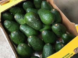 Авокадо сорта Хаcс (Hass) из Мексики