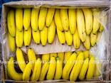 Бананы оптом (Эквадор). Лучшее предложение в Украине. Звоните - фото 2