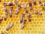 Бджолиний мед зі своєї пасіки - фото 3