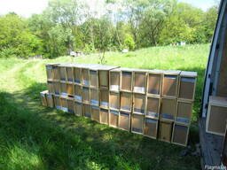 Бджолопакети , Пчелопакеты на 2019 год с доставкой Киев