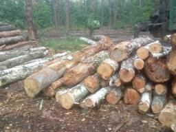 Продам дрова березы - фото 3