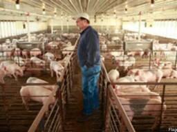 Бизнес-план свиноферма - готовый пример финансового расчета