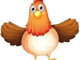 БМВД для цыплят и курей несучек (Старт 25%, Откорм 20%)
