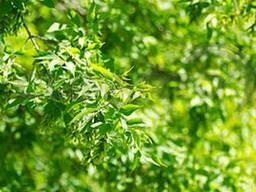 Болезнь листьев