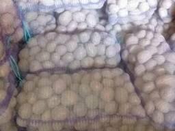 Большие объёмы картофеля оптом