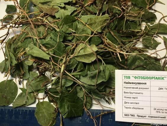 Боровая матка трава, ортилия.Лечение женских болезней