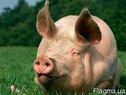 БВМД для свиней Гровер-Финиш универсальный (15-10%)