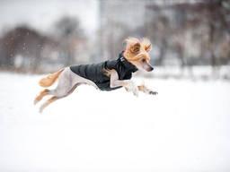 Cамая лёгкая в мире курточка для собак от AiryVest!
