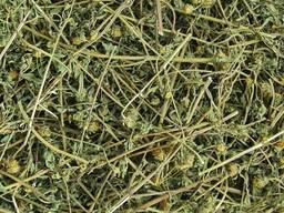Череда трехраздельная (трава)