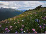 """Черновцы эко-тур""""цветение альпийских лугов в карпатах"""" - фото 1"""