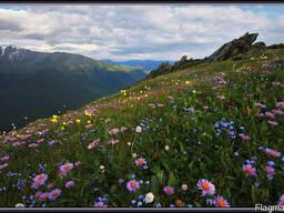 """Черновцы эко-тур""""цветение альпийских лугов в карпатах"""""""
