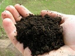 Чернозем для посадки деревьев.