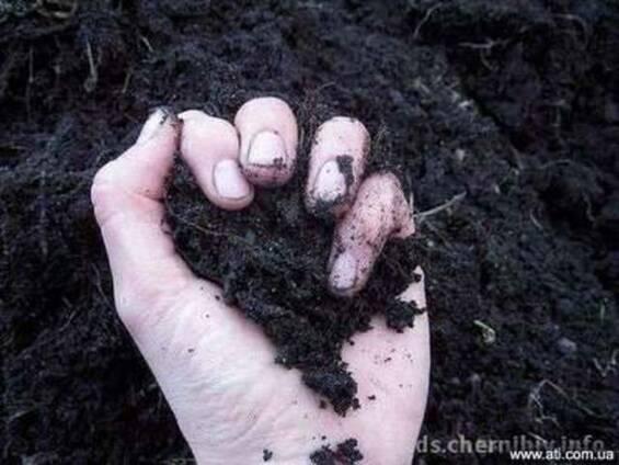 Чернозем продажа, чернозем доставка, чернозем Киев и Киевска