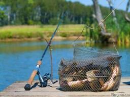 Червь Старатель для рыбалки (50 шт. )