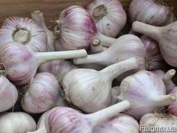 Чеснок (часник) зимний (луковицы 4-8 см) домашний без химии
