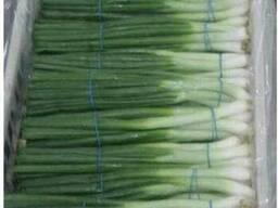 Чеснок, зелёный лук