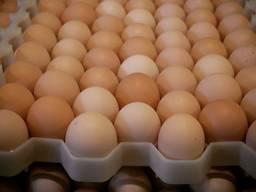 Chicken Broiler Hatching eggs (Ross/Cobb)