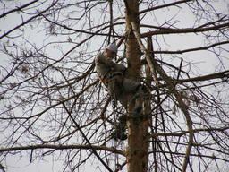 Удаление деревьев пригород киева Сосновый Бор