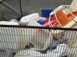 Чистые отходы ПП, ПЭТ, ПВХ пленки - фото 4