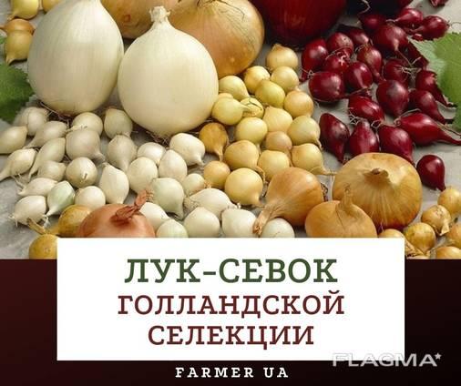 Цибуля саджанка (Лук севок)