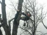 Cпил деревьев - фото 8
