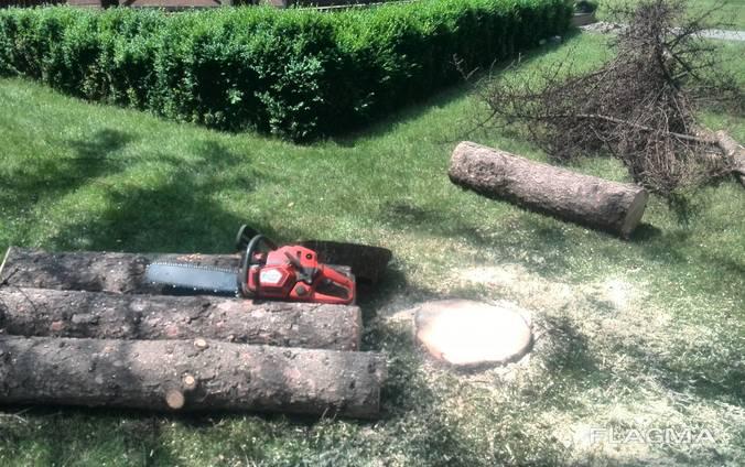 Cпил деревьев