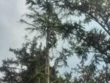 Cпил деревьев - фото 2
