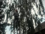 Cпил деревьев - фото 4