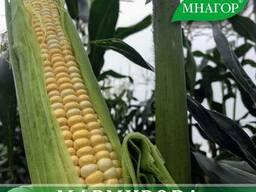 Цукрова кукурудза Мармурова F1, 20000 семян, ТМ Мнагор