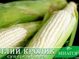 Цукрова кукурудза, молочно-біле зерно, ранньостигла 72-74
