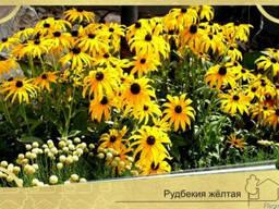 Цветники создание в Севастополе
