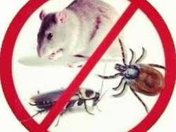 Дератизация. Крыс нет!