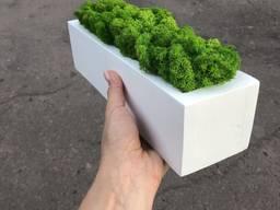 Деревяное кашпо со стабилизированым мхом 30 см MiNature Moss