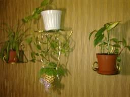 Подвесные цветочницы Луцк